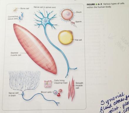 Phlebotomy Handbook 8th Edition - Chapter 6 - Figure 6-3